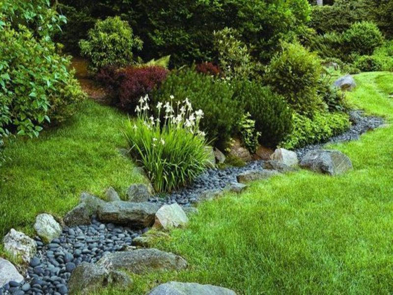 dry creek landscaping ideas with lush botanicals
